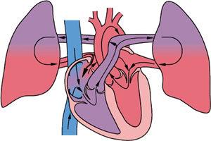 leszokni a szívről és a tüdőről)