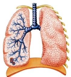 tüdőbetegség tünetei)