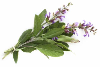természetes gyógynövények hogy lefogyjon